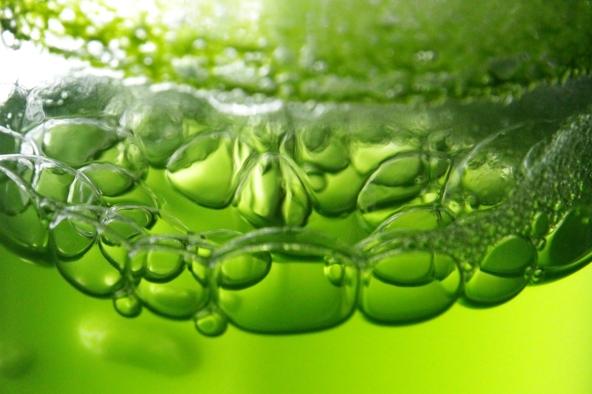 algae-baliga