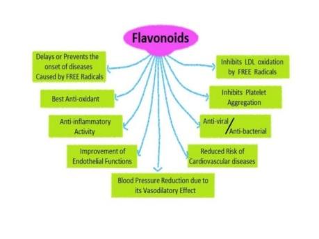 flavonoids-12-638