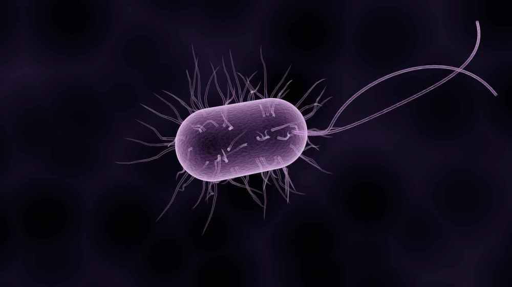 bacteria-1280
