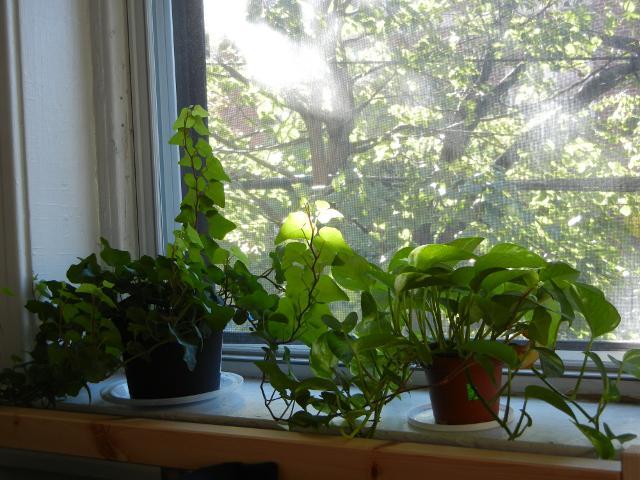 houseplants-windowsill-shade